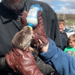 Rescuing Rocky the otter cub