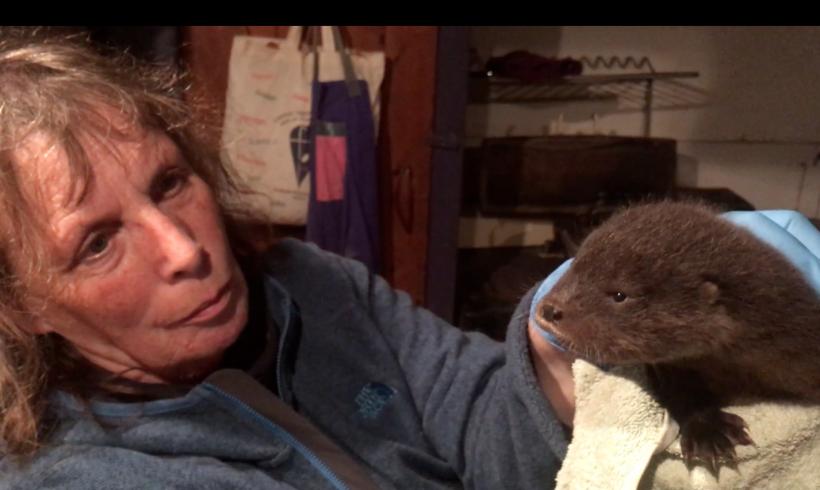Rescuing Oskar the otter