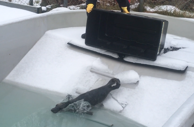Cooper the grey seal goes outside