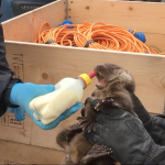 Rescuing Ranger the otter cub