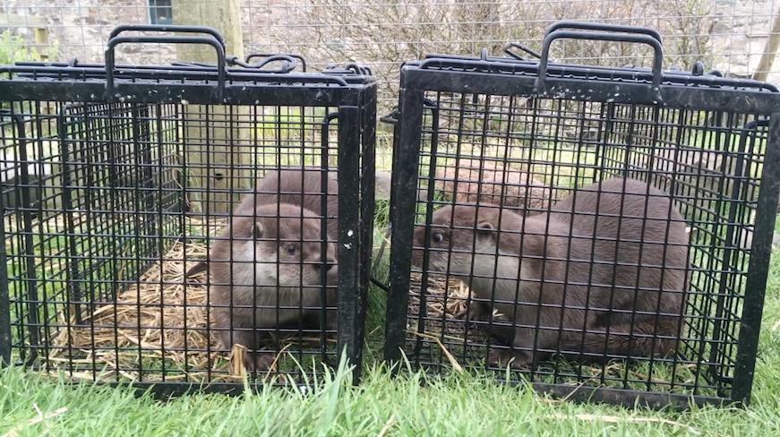 Oskar meets Tivacudda – Part Two – Hillswick Wildlife Sanctuary