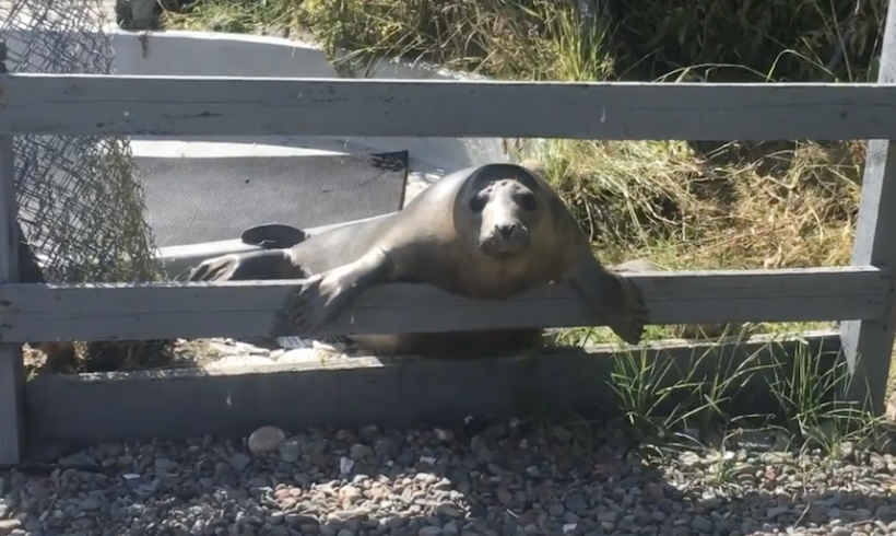 Shooglenifty – an unorthodox seal release
