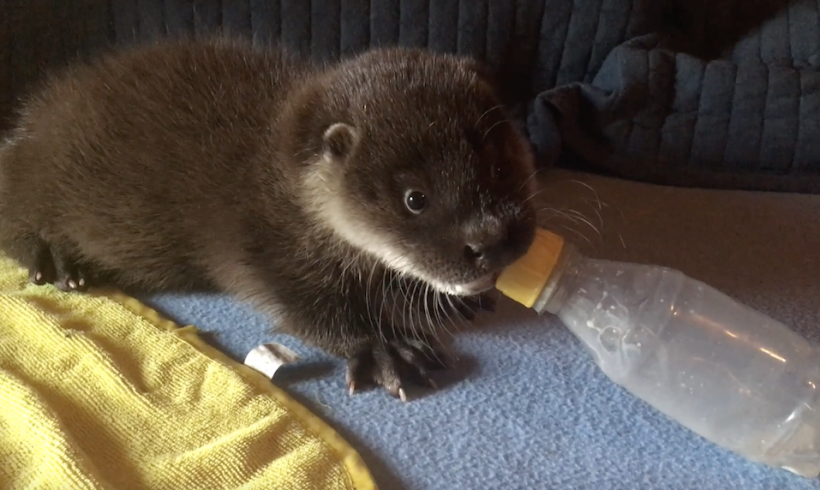 Burgess and his bottle
